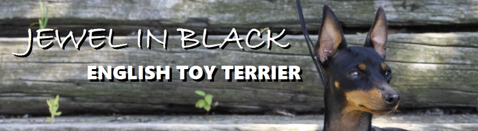 ETT u. Reisen - english-toy-terrier.at